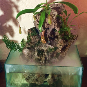 Wabi-Sabi Living Sculptures - Rock, plastic, epoxy, electronics, water, carnivorous plants and ferns create a exotic table top eco system.